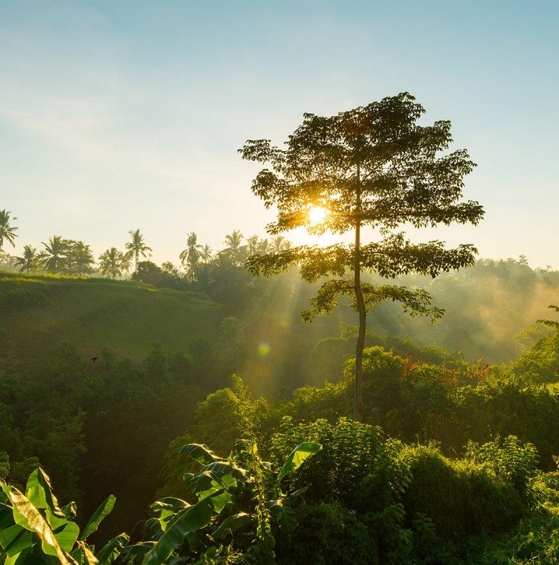 Sun-rising-behind-tree