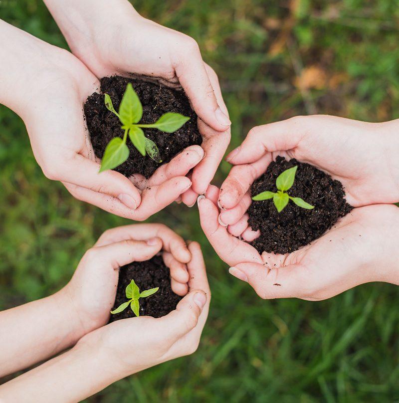 Volunteers-helping-reforestation